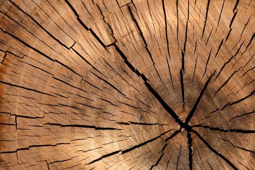 wpływ temperatury na drewno